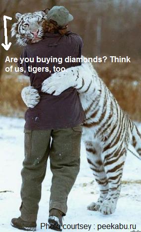 tiger daimond
