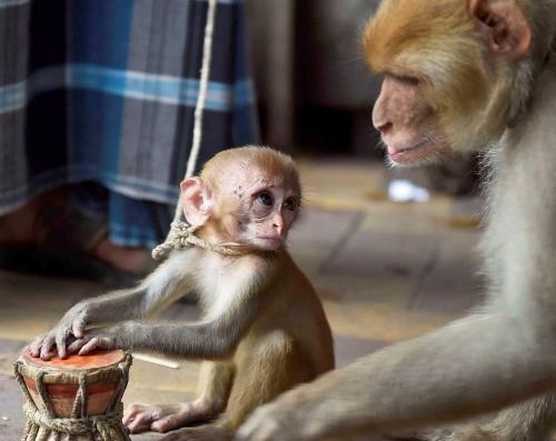 MonkeySuffer