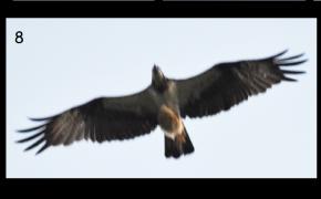 లోకల్ Vs.నాన్-లోకల్                                          Birds of DifferentFeather