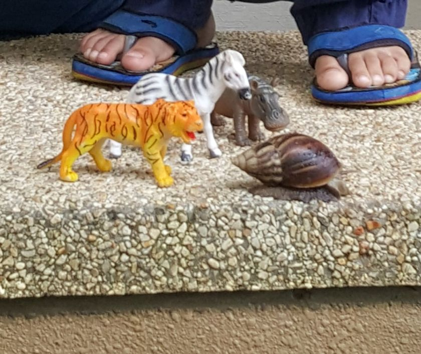 snail & animals